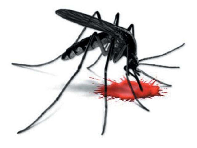 Dedetização de Dengue